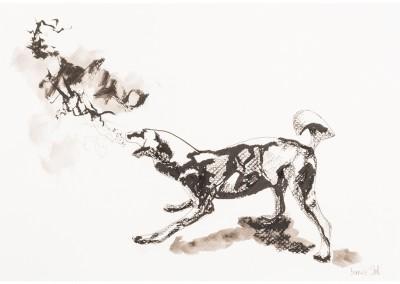 African Wild Dog 1